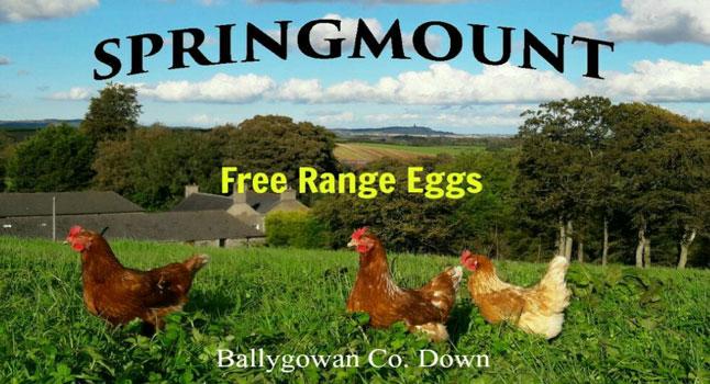 springmountfarm